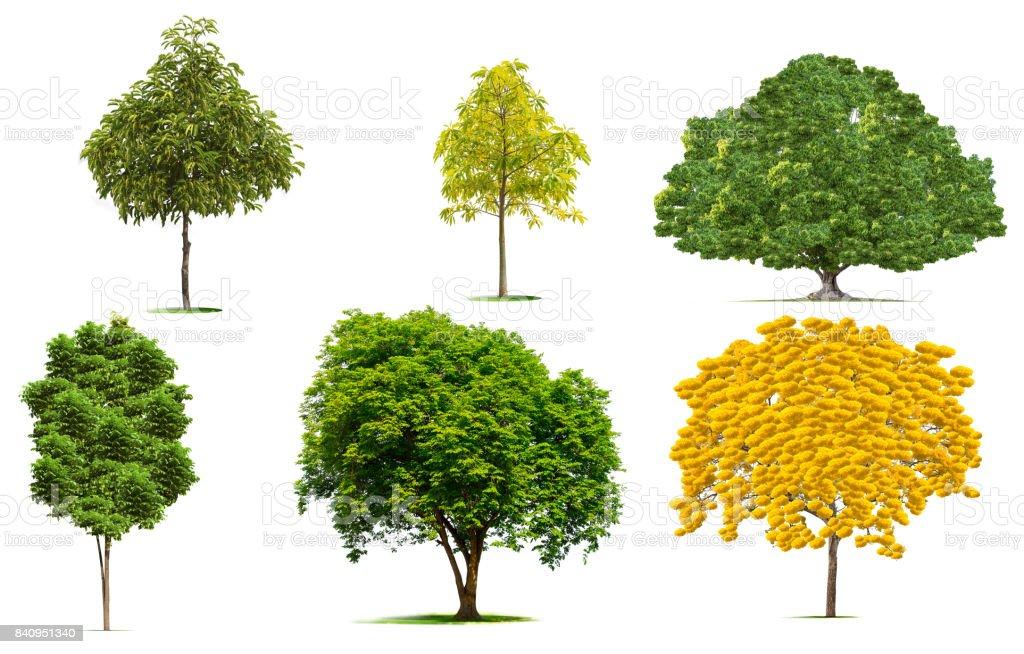 Árboles de hermosas flores amarillas... trazado de recorte. - foto de stock