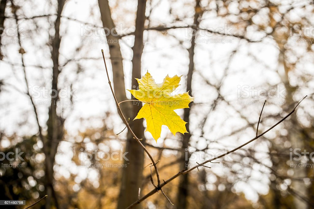 beautiful yellow leaf weighs himself on a branch photo libre de droits