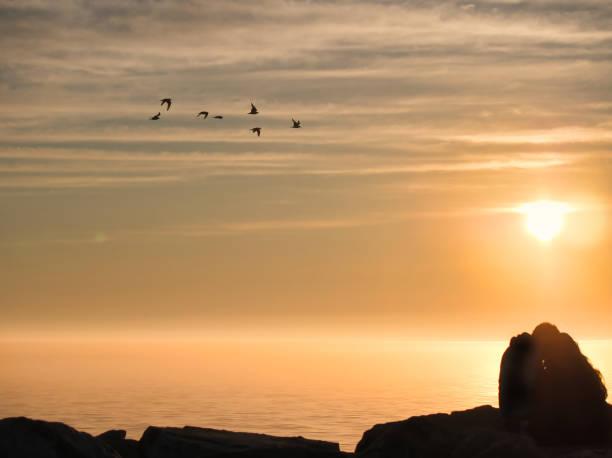 Beautiful yellow sunset and foggy sky reflection, fog whit birds stock photo