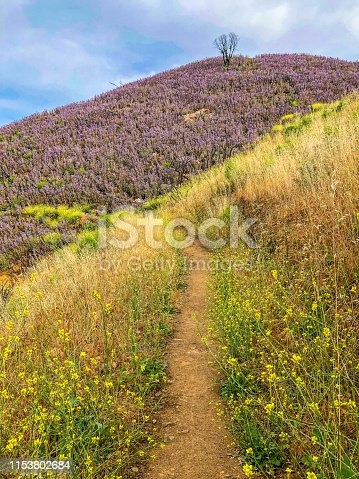 470521655 istock photo Beautiful Yellow to Purple Hills Trail in the Santa Monica Mountains 1153802684