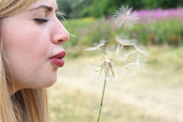 beautiful young blonde bulgarian outdoor girl blowing soft goatsbeard seeds - whiteway english outdoor girl stock photos and pictures