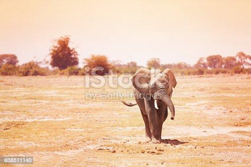 Beautiful young elephant walking along in Kenyan savanna, Africa