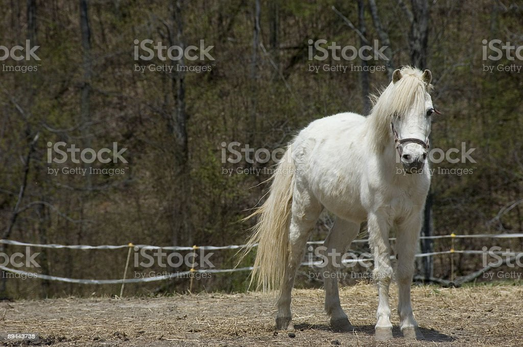 Beautiful young horse in a farm royalty-free stock photo