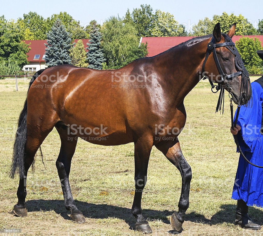 beautiful young horse royalty-free stock photo