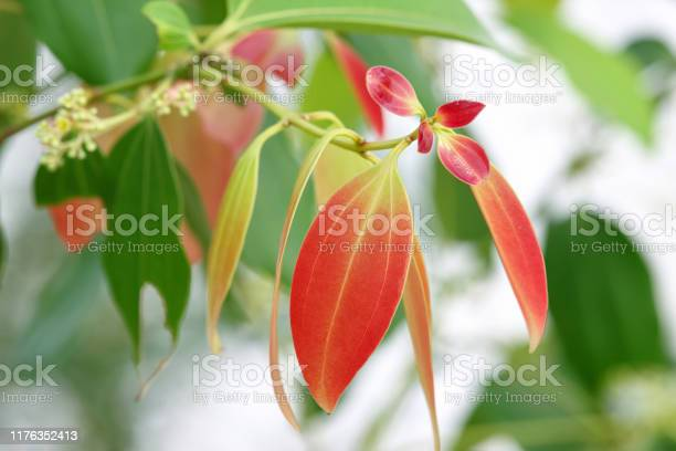 Beautiful Young Leaves Stock Photo - Download Image Now