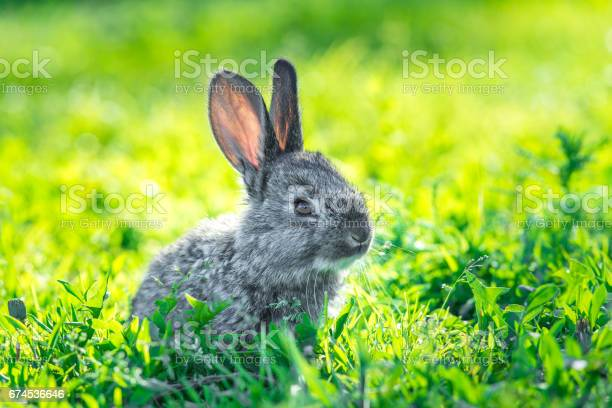 Beautiful young small rabbit on the green grass picture id674536646?b=1&k=6&m=674536646&s=612x612&h=hro9dwtkmghfdkbhvtfjajjshd la1flb8h7n0segci=