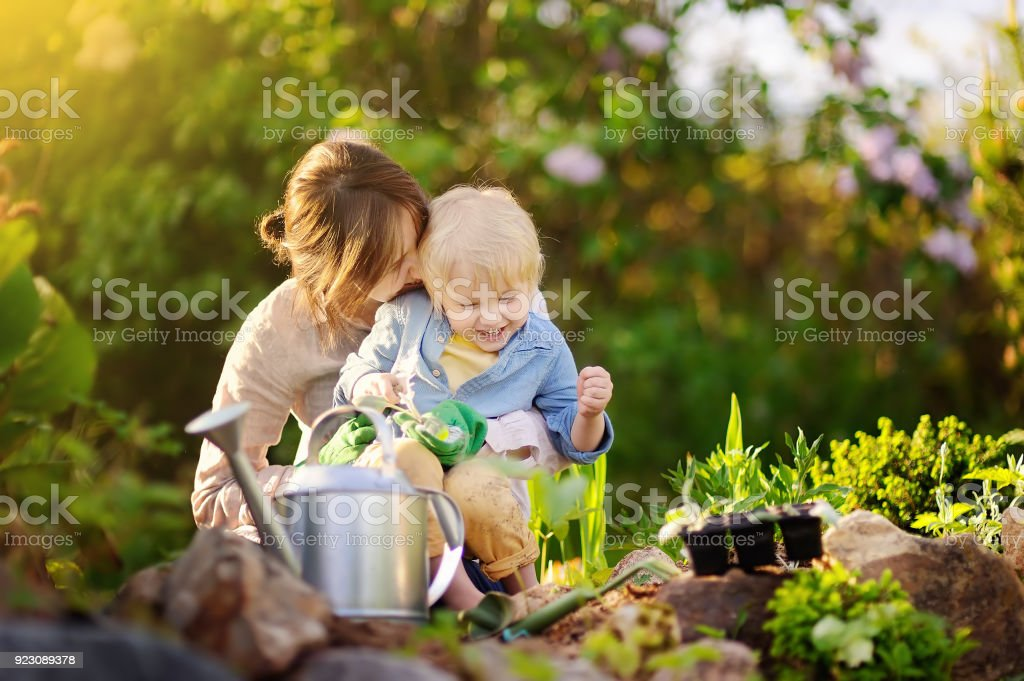 Beautiful young woman and her cute son planting seedlings in bed in the domestic garden at summer day stock photo