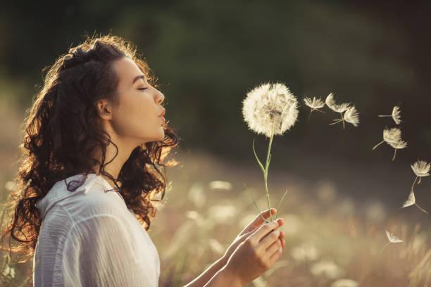 美麗的年輕女子吹蒲公英在小麥田在夏日日落。美容夏日概念 - 大自然 個照片及圖片檔