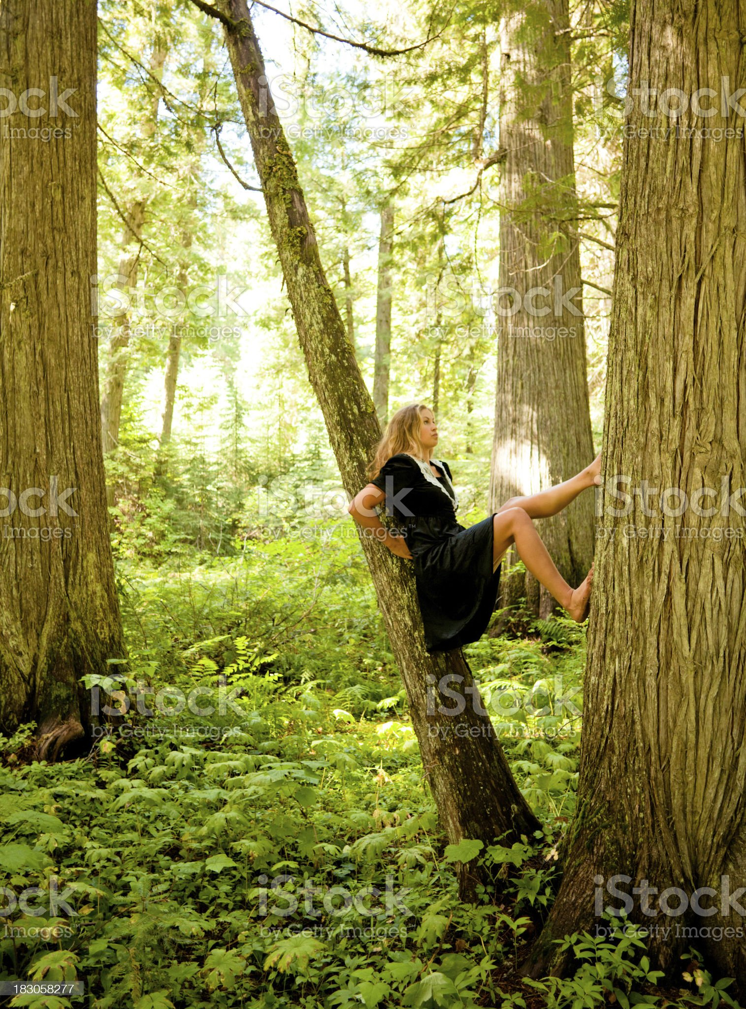 https://media.istockphoto.com/photos/beautiful-young-woman-stretching-in-a-tree-picture-id183058277?s=2048x2048