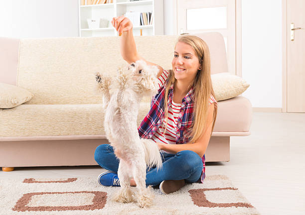 Beautiful young woman training her dog picture id476918105?b=1&k=6&m=476918105&s=612x612&w=0&h=u8gaahiu0 3fmzyxrodmvajuxalw7vhvvtw2tj1af3e=
