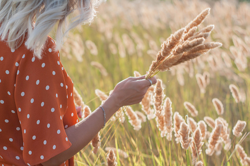 Beautiful young woman walks in the field collects a bouquet of flowers and spikelets, weaves a wreath of flowers on sunset