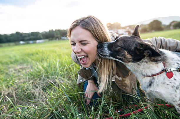 Beautiful young woman with dog in green sunny nature Beautiful young woman on a walk with a dog in green sunny nature, dog licking her face licking stock pictures, royalty-free photos & images
