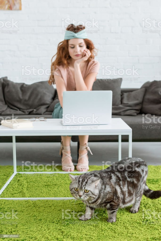 beautiful young woman working with laptop while her cat lying on floor on foreground at home stock photo