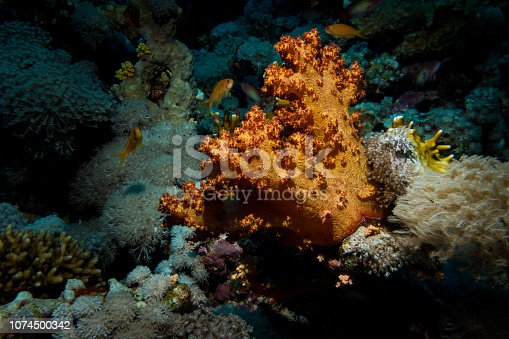 Close up - Beautifull corals at reef in theRed sea, Egypt