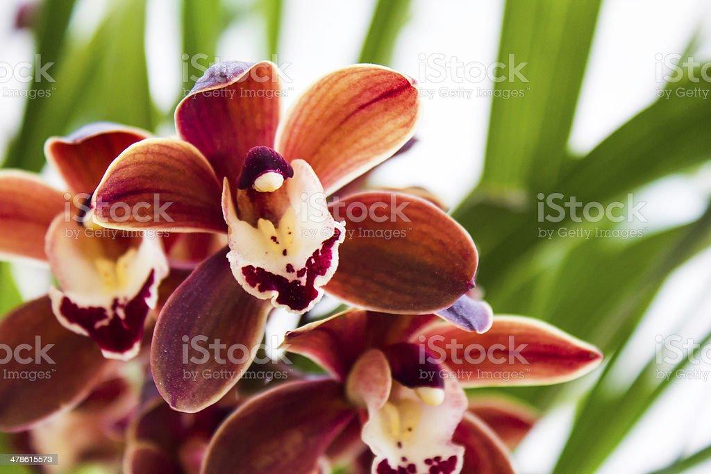 Beautifull flower – zdjęcie