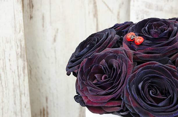 Beautifull flowers picture id505819954?b=1&k=6&m=505819954&s=612x612&w=0&h=wr2wyk6x3nzckeg45ytp cznuobzncpbq4k5cfqwxjw=