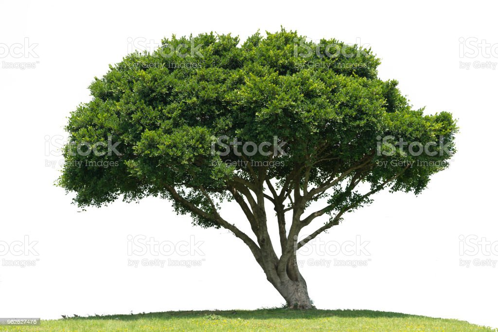Beautifull green tree on a white background in high definition - Royalty-free Agricultural Field Stock Photo