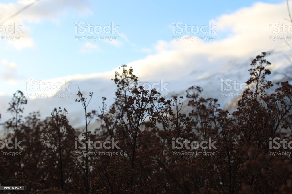 Beautifully landscaped foto stock royalty-free