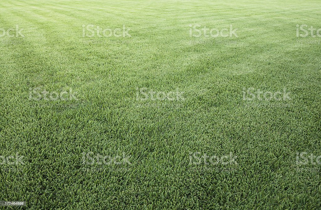 Beautifully manicured green lawn royalty-free stock photo