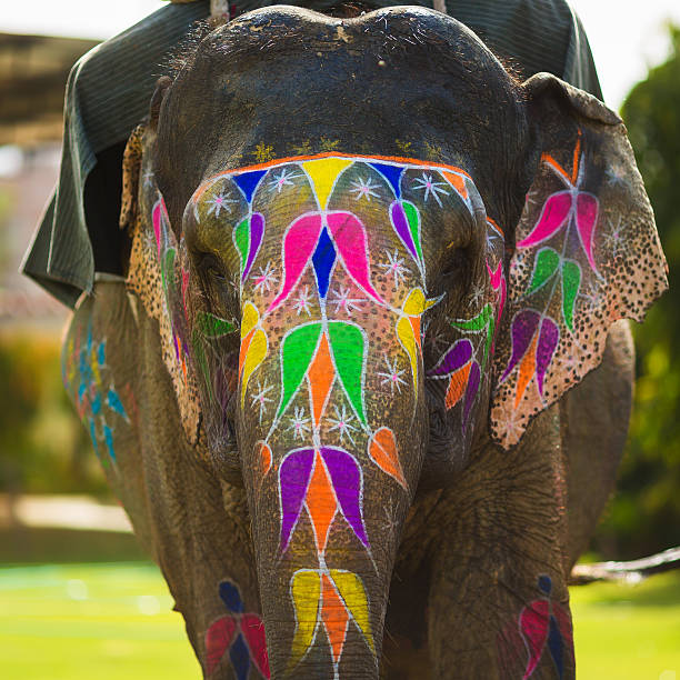 Royalty Free Indian Elephant Pictures, Images and Stock ...