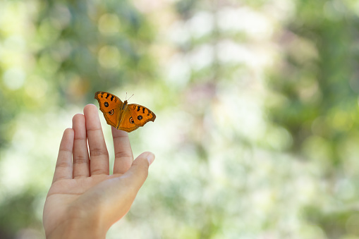 istock Beauty butterfly on hand with bokeh blurred background. Butterfly closeup. Nature background Macro. 1130948052