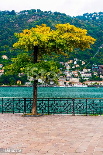 Beauty colorful tree in Como, Italy.