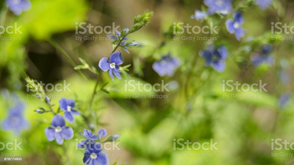 fleurs de beauté au printemps photo libre de droits