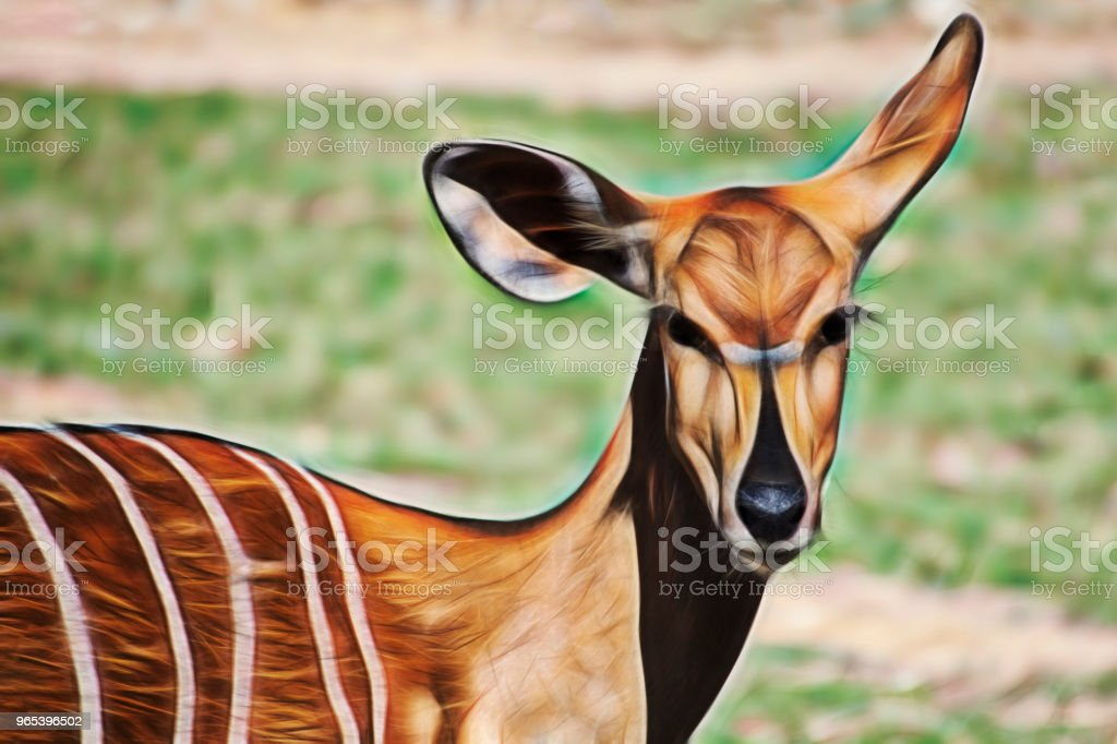 beauty gazelle fractalius zbiór zdjęć royalty-free