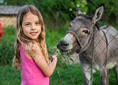 Portrait cute little girl feeding with grass donkey at the ranch
