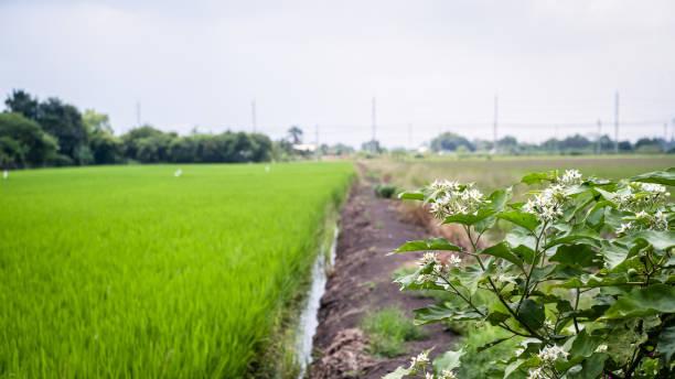 Campo verde de beleza - foto de acervo