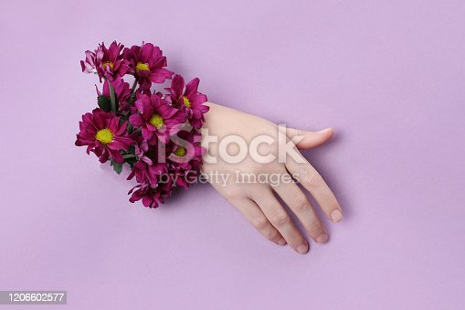 istock Beauty Hand with flowers in a hole in a purple paper background. Nature hand Cosmetics, natural flower extract, moisturizing and softening the skin 1206602577