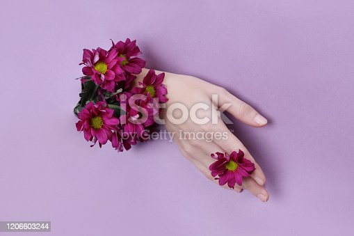 istock Beauty Hand with flowers in a hole in a purple paper background. Nature hand Cosmetics, natural flower extract, moisturizing and softening the skin 1206603244