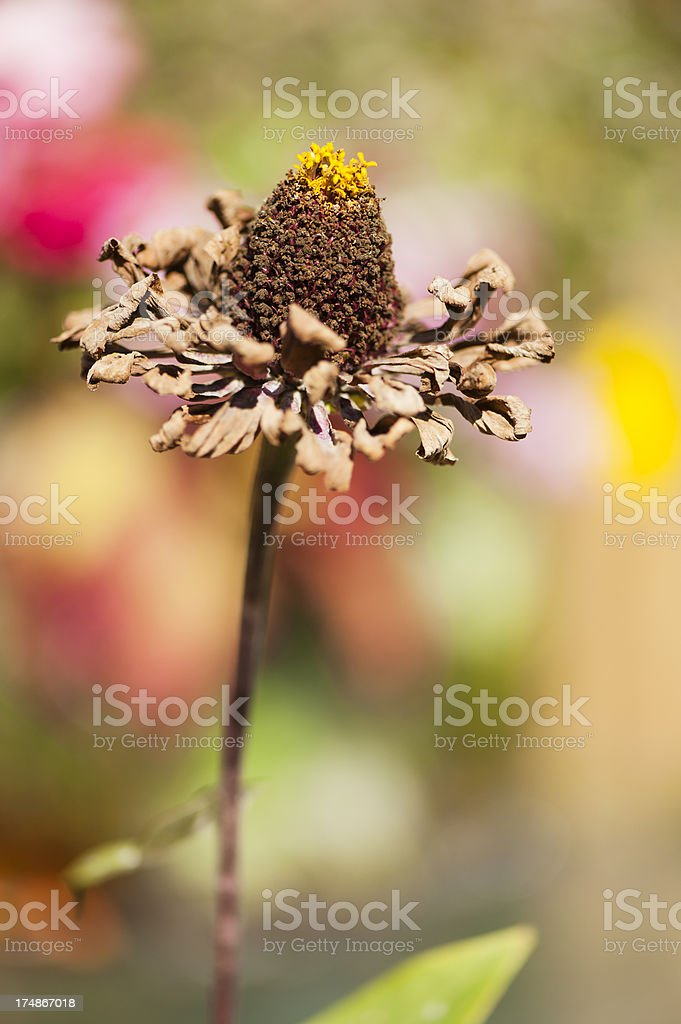 Beauty in Death Series royalty-free stock photo