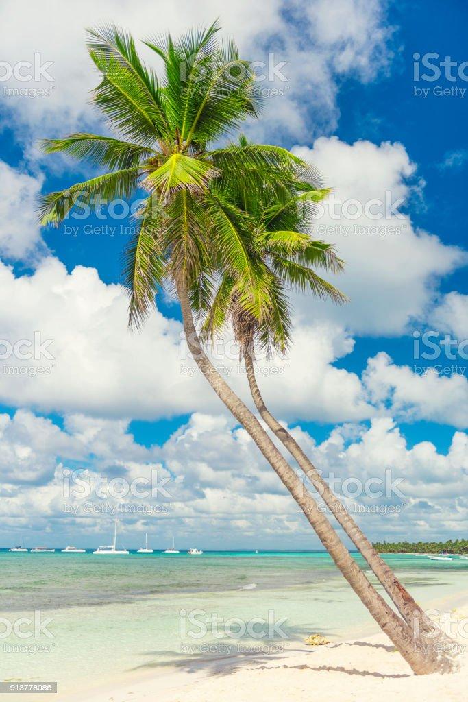 Belleza en la naturaleza en la Isla Saona, República Dominicana - foto de stock