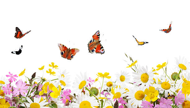 Beauty in nature picture id105950091?b=1&k=6&m=105950091&s=612x612&w=0&h=kxplebbqgqlxfd6yecfvebfx80ul6arqktbbskdhg5o=