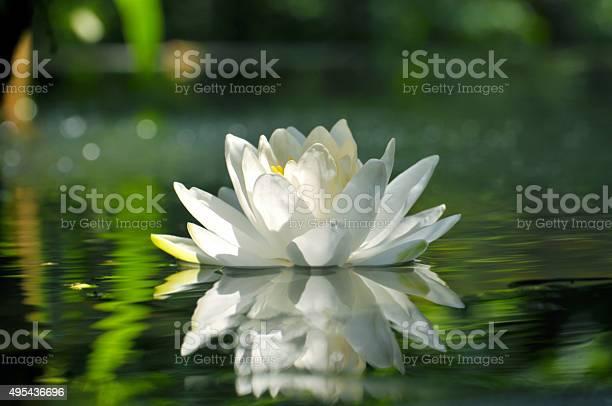Beauty in nature picture id495436696?b=1&k=6&m=495436696&s=612x612&h= g7ix6 frjghzpv4ywywhppo14vc uc8cw szfpiazo=
