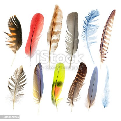 istock beauty in nature 648045356
