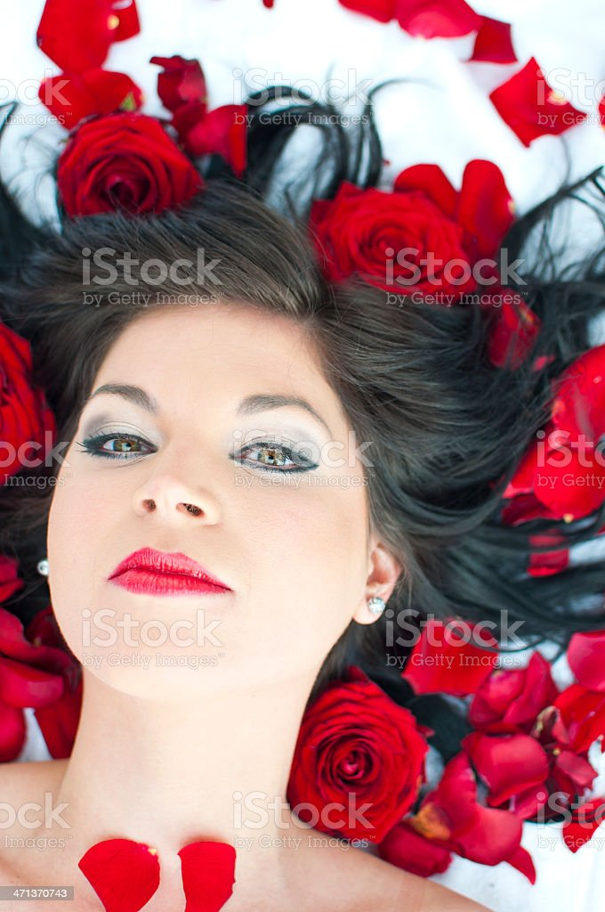 Beauty in red roses royalty-free stock photo