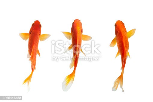 fish isolated on white background . selective focus