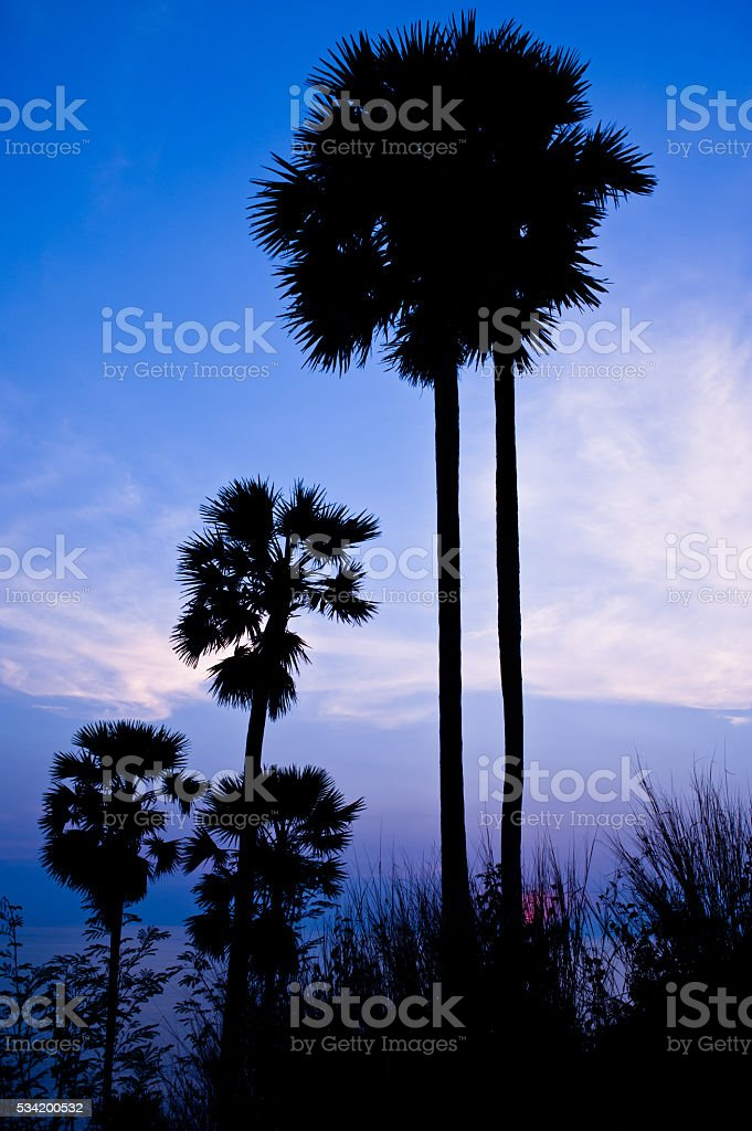 Beauty landscape with golden sunset above the sea background stock photo