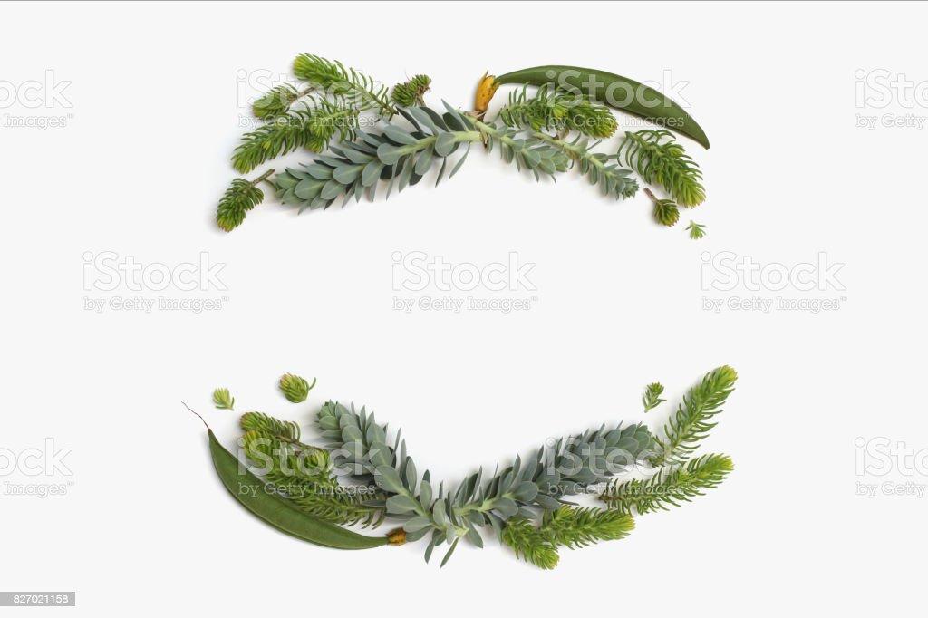 Skönhet minimalistisk ram krans med gröna och blå saftiga växter. Platt lekmanna, top view. bildbanksfoto