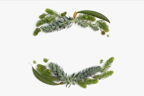 Beauty minimalistic frame wreath with green and blue succulent plants. Flat lay, top view. stock photo