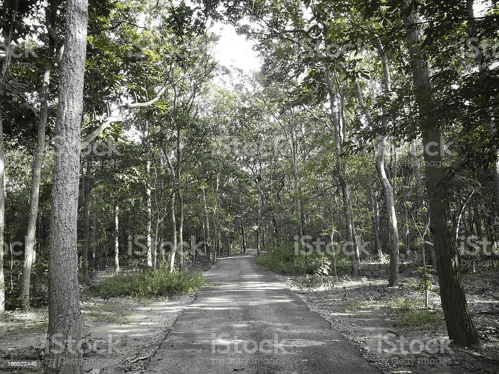 Beauty of autumn forest royalty-free stock photo