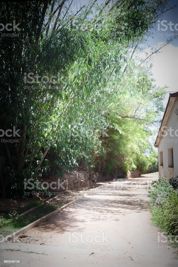 Beauty of Bamboos royalty-free stock photo