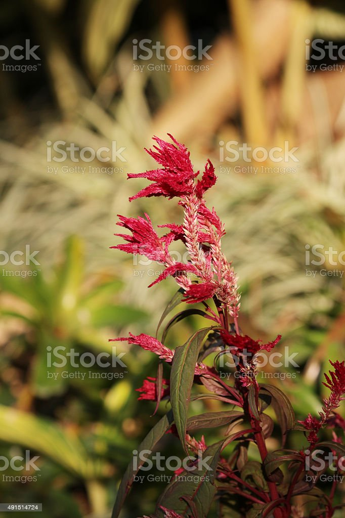 beauty of flower in garden stock photo