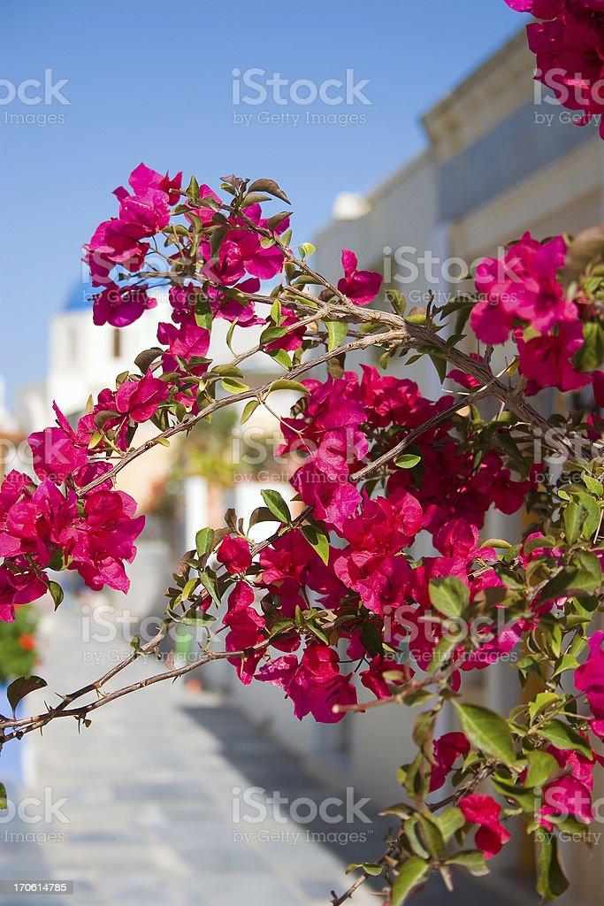 Beauty of Greece royalty-free stock photo