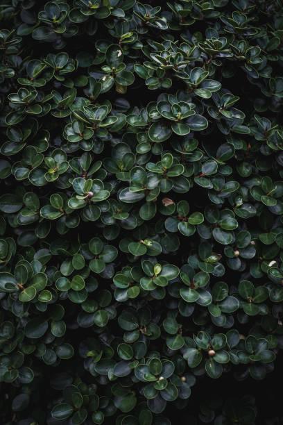 Beleza das folhas verdes - foto de acervo