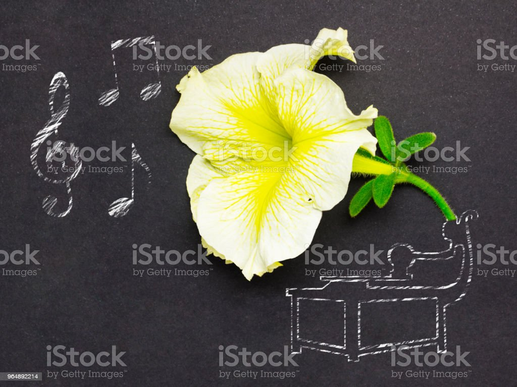 Beauty of music. royalty-free stock photo