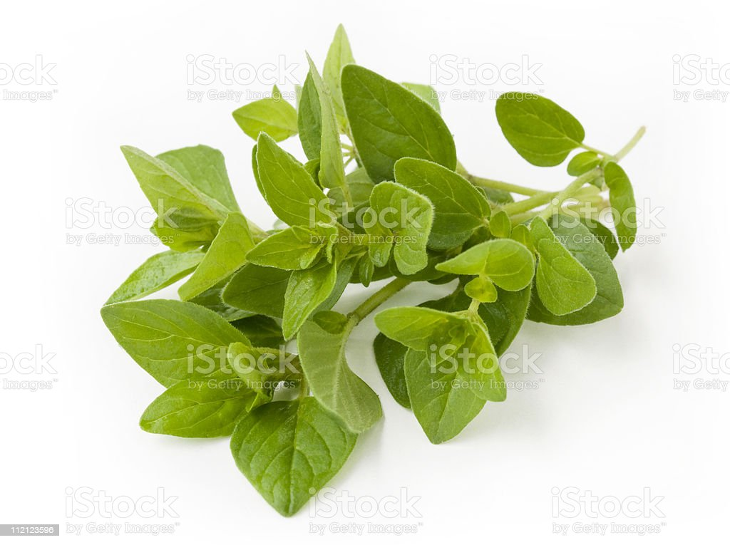 Beauty of nature expressed in this fresh oregano sprig stock photo