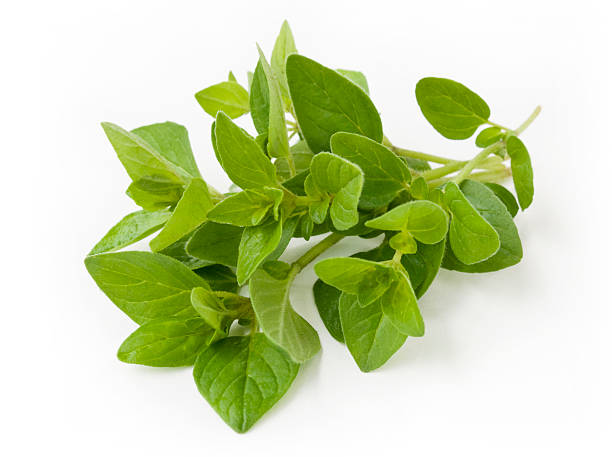 Beauty of nature expressed in this fresh oregano sprig Fresh oregano sprig + clipping path oregano stock pictures, royalty-free photos & images